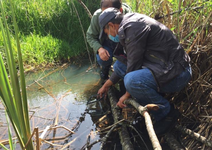 Dirección de Ecología y Medio Ambiente y SEIGEN liberan Popoyotes en el Humedal Lagos de María Eugenia
